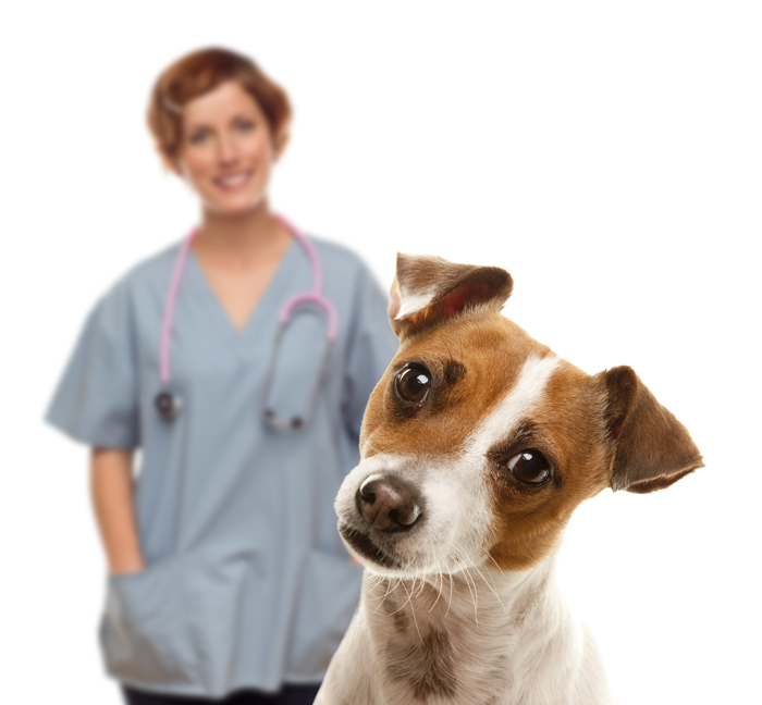ultrasound therapy for dogs